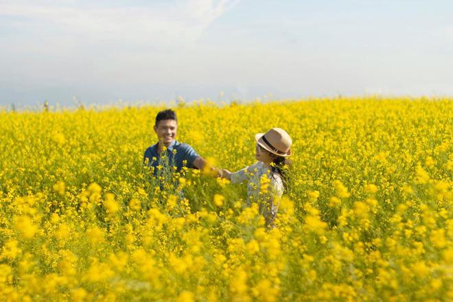 Dân mạng sửng sốt trước cánh đồng hoa cải vàng đẹp như tranh vẽ có thật tại Đà Lạt, xem ảnh mà ngỡ đâu nước Nhật xa xôi - Ảnh 1.