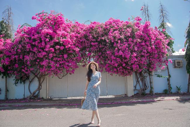 Giàn hoa giấy hồng nở rực rỡ ở Vũng Tàu trở nên nổi tiếng trên mạng xã hội sau bộ ảnh check-in của một cô gái  - Ảnh 2.